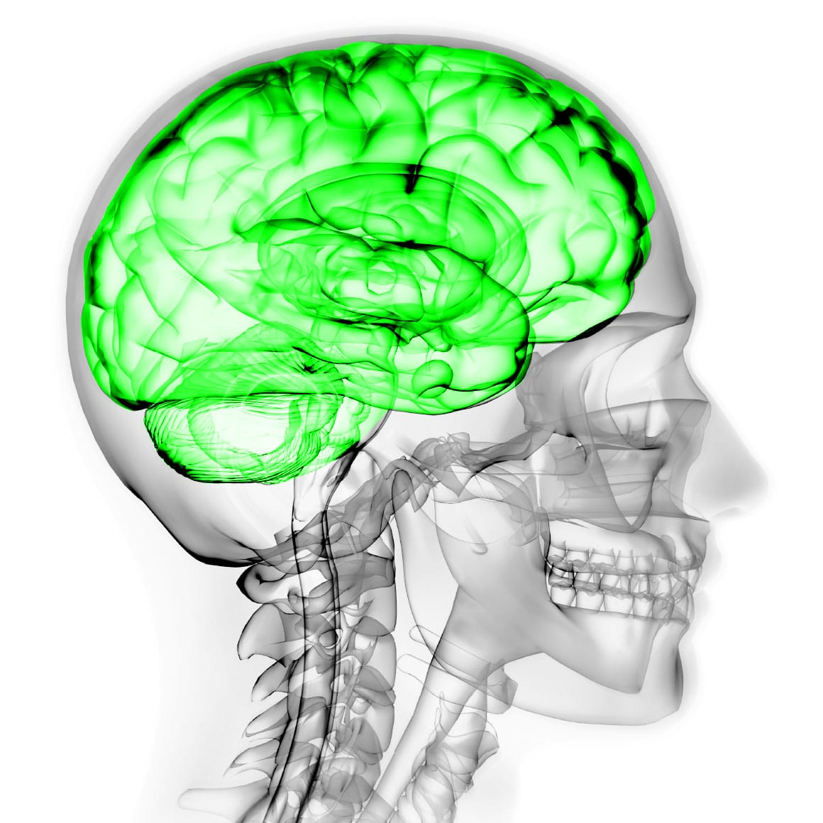 Koroyd Safety Initiative Brain Illustration